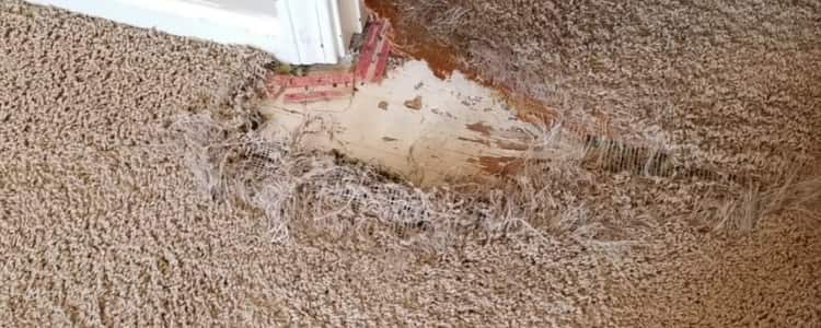 Best Carpet Repair Montrose