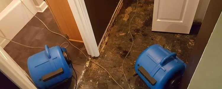 Best Flood Damage Restoration Montrose
